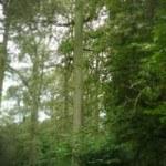 hout design uit één boom